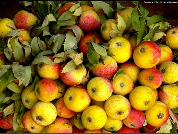manzana etna puma cola